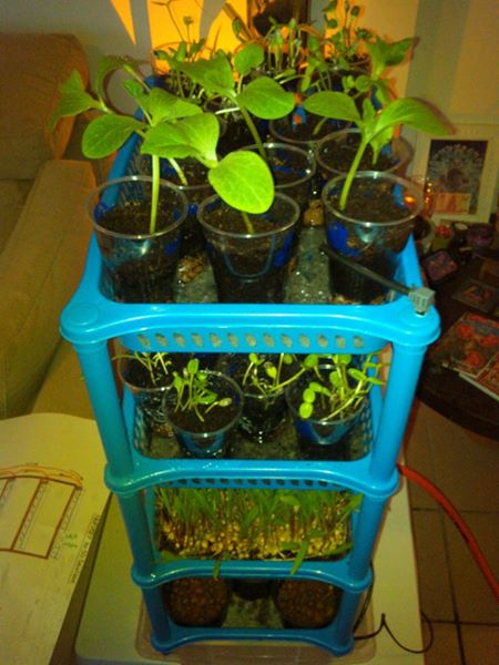 Seedling sprouter (2)