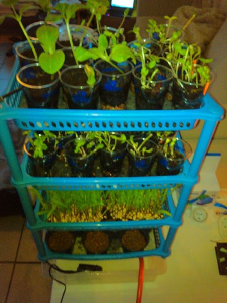 Seedling sprouter (3)